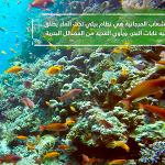 Nat Geo Abu Dhabi works with EAD on documentary highlighting UAE's natural heritage