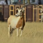Image Nation Abu Dhabi ties with local authorities to present 'Back to the Wild'