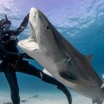 Discovery channel announces new content lineup for Shark week