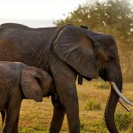 Africa Wildlife Tracking uses Orbcomm satellite tech for conservation efforts